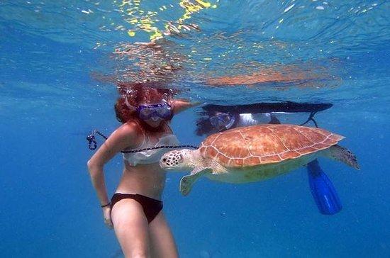 Excursão Florida Eco, Paddle e Snorkel