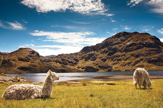 Private Tour to Cajas National Park...