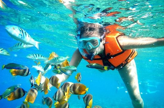 Snorkel Tour in Puerto Morelos from...