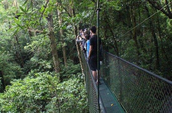 Excursión por puentes colgantes en...