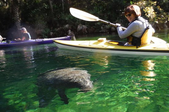 Manatee Kayak Tour at Blue Springs