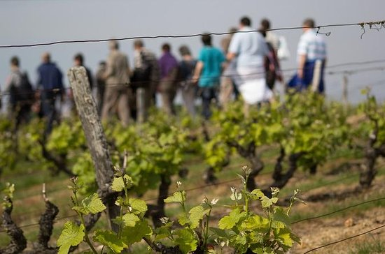 Tour of a Vineyard, Winery and Cellar...
