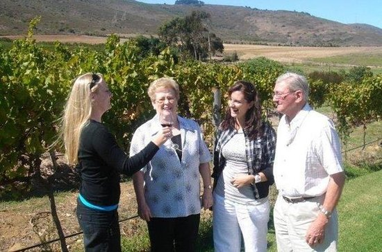 Full-Day Private Wine Tour from...