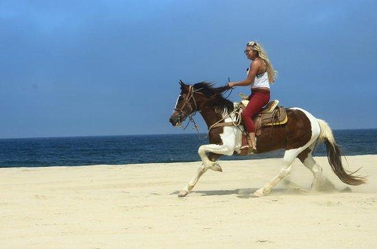 Cabo San Lucas Horseback Beach Ride...