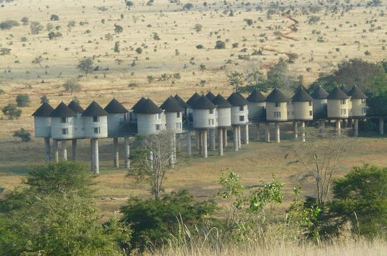 2-Day Safari in Taita Hills from...
