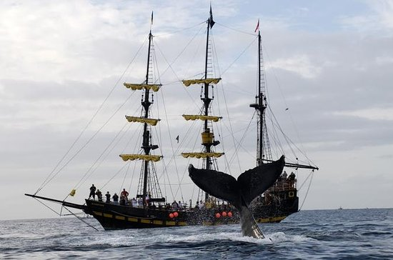 Whale-Watching Pirate Ship Cruise i ...