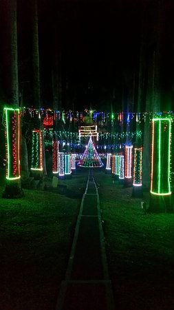 Scarborough Botanical Garden Looking Down The Light Pathway Christmas Lights