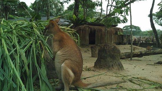 animals of zoo negaera kl picture of zoo negara ampang tripadvisor