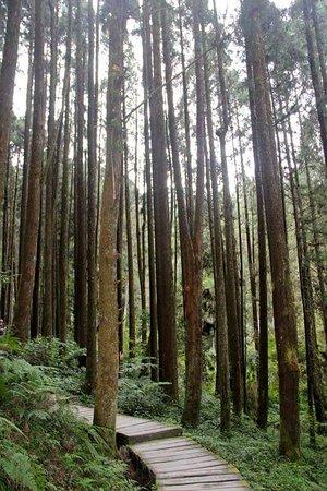 杉林溪森林生態渡假園區: 1233114236732361_large.jpg