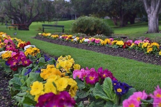 Veale Gardens