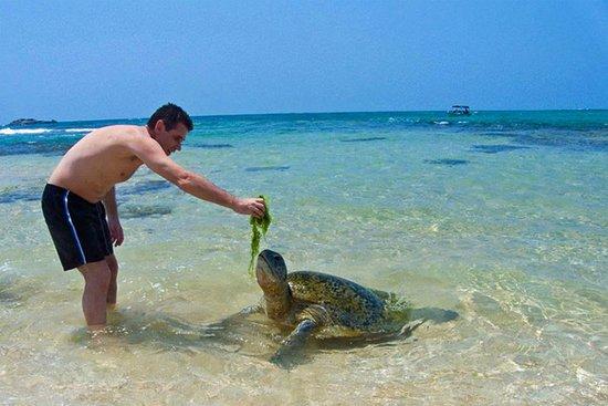 Hotel Rekawa Beach Sri Lanka