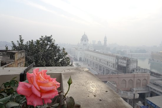 Hotel Sapphire: Rooftop view augmented by roses!