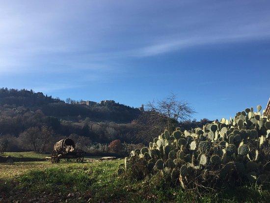 Radicondoli, Italia: Dintorni