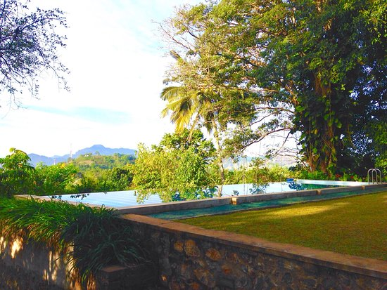 Mount Havana : The amazing pool overlooking the mountains and part of the organic veggie garden