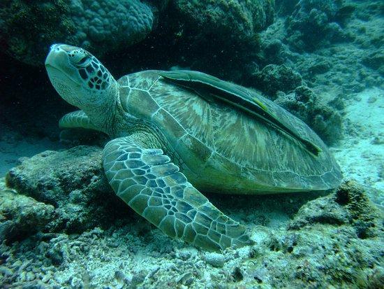 Zdjęcie Panorama Diving Resort