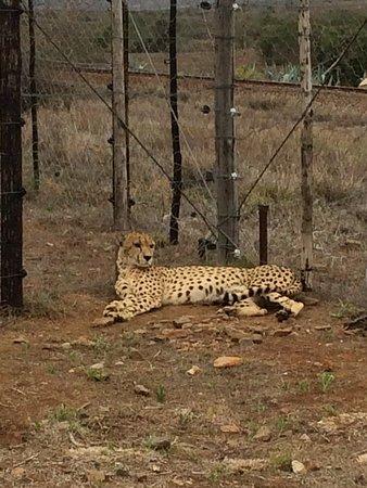 Daniell Cheetah Project: photo0.jpg