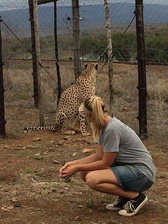 Daniell Cheetah Project: photo1.jpg