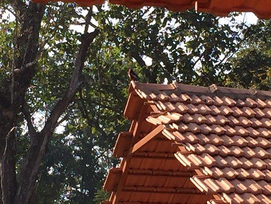Dandeli Jungle Nest Homestay