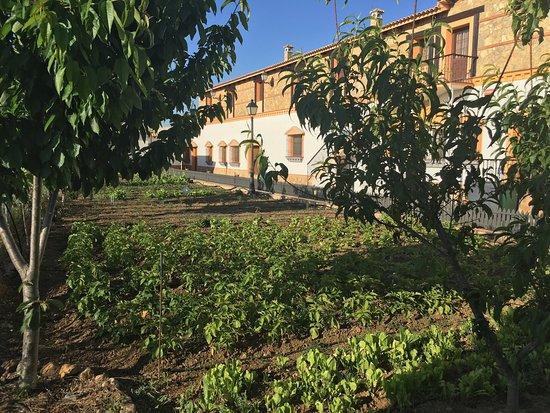 Fuente Obejuna, España: Jardines