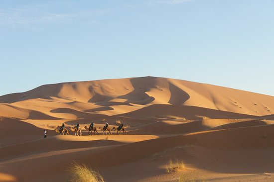 Sahara ATVs: camel treking