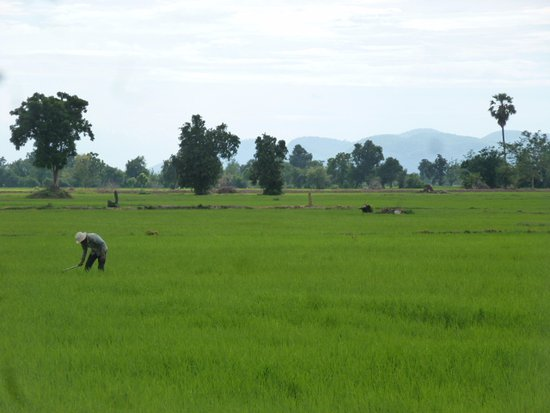Kim Tours Battambang