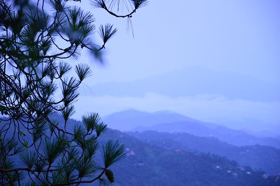 Kasauli Exotica: from the hotel stairs
