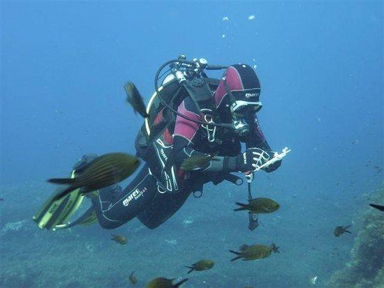 Levanzo, Italija: immersioni riservate max 4 sub + la guida