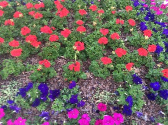 Surroundings - Picture of Hilton Garden Inn Tampa East/Brandon ...