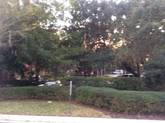 Surroundings Picture Of Hilton Garden Inn Tampa East Brandon Tampa Tripadvisor