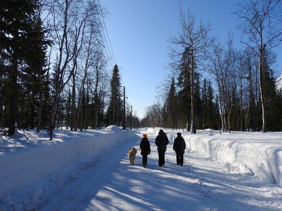 Polar-Alpine Botanical Gardens: Экскурсия