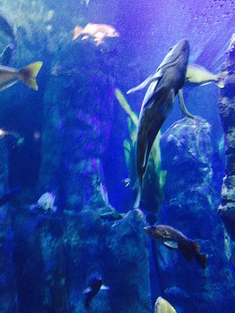 Oregon Coast Aquarium: photo4.jpg