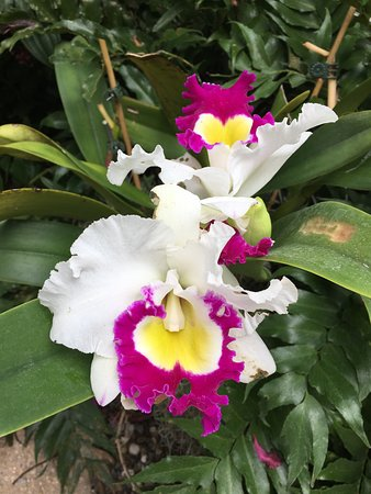 Orchids In The Orchid Garden Picture Of Naples Botanical