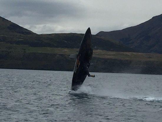 Queenstown, Nya Zeeland: Big jump