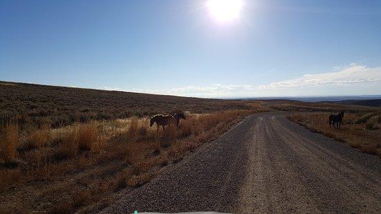 Rock Springs, WY: Wild Horses