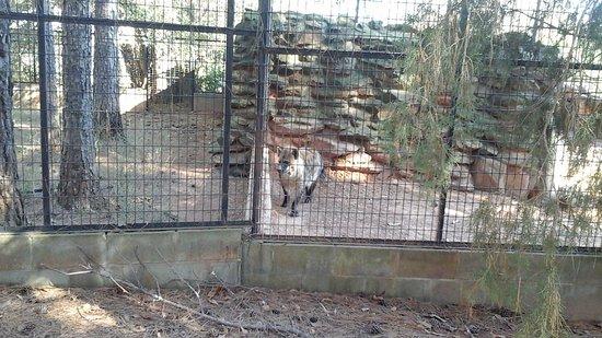 Pine Mountain, GA: Hyena