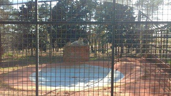 Pine Mountain, GA: Tigers