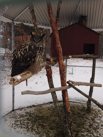 Bolton, MA: Owls