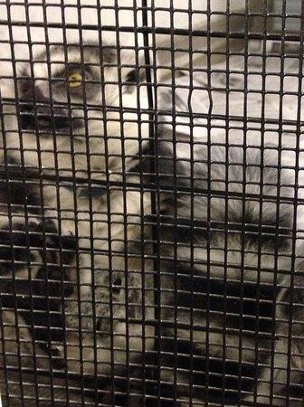 Bolton, MA: Ring-tailed Lemurs