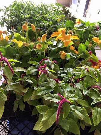 Drayton Valley, Canada: Seasonal plants are available in the spring in time for garden season.