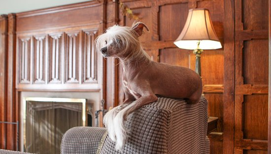 By The Park Bed and Breakfast: Fendi - resident dog