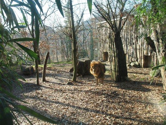Giardino Zoologico Di Pistoia Giardino Zoologico Di