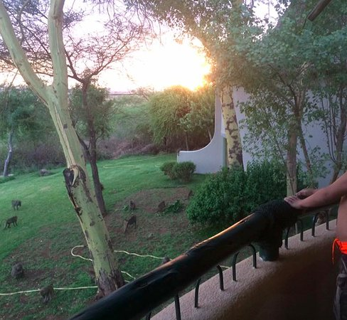 Lake Manyara Serena Lodge: View from our balcony of the baboons hanging around