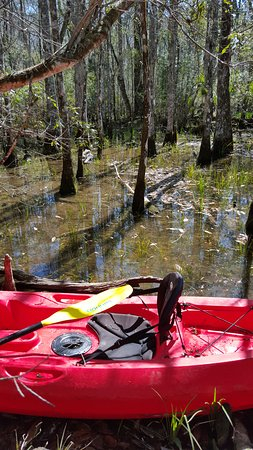 TNT Hideaway Day Tours: Kayaking in the swamp off Wakula River