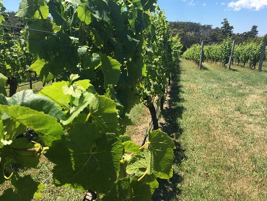 Orford, Australia: Darlington Vineyard