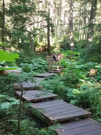 Giant Cedars Boardwalk Trail: Belle balade