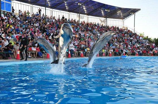 Spectacle de dauphins à Sharm...