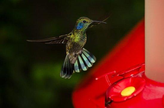 Selvatura Park: Hummingbird Garden...