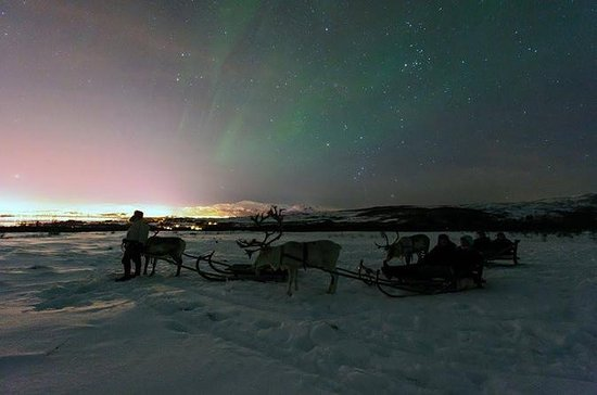 Northern Lights and Reindeer Sledding ...
