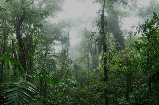 Monteverde Cloud Forest and Coffee...