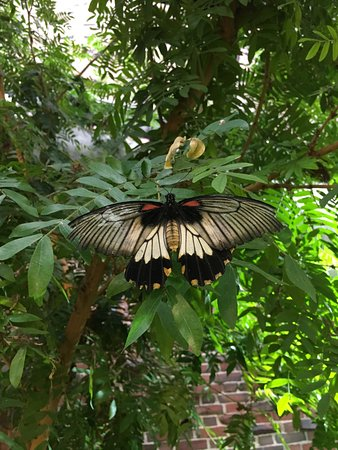 Charmant Museum Of Science: Butterfly Garden